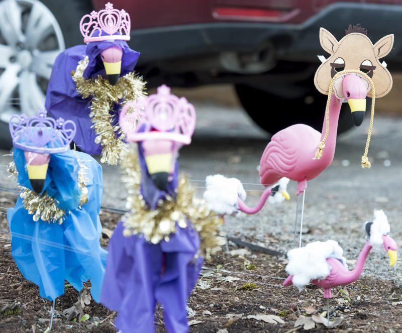flamingo christmas three wise men sheep ass donkey lamb nativity