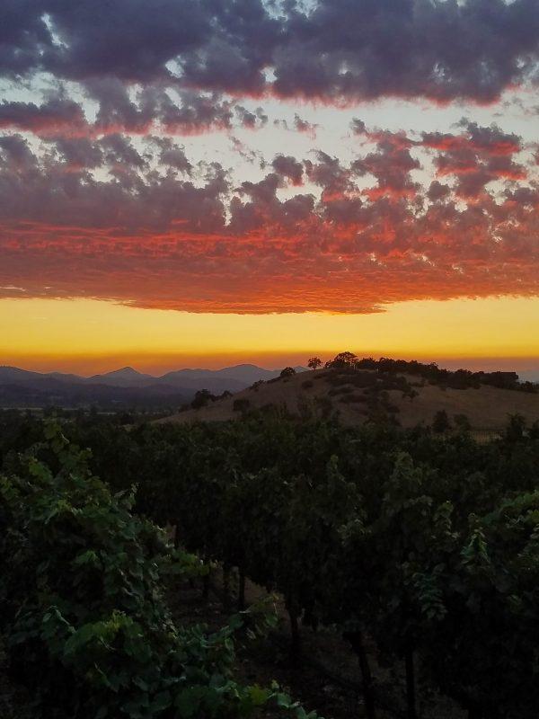 paschal winery vineyards sunset