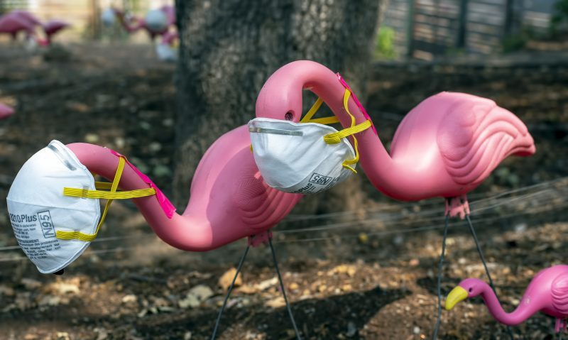 pink flamingo lawn ornaments N95 air filter mask