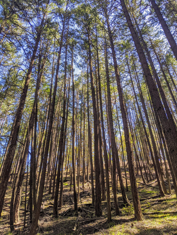 pinball pepsi ashland trail