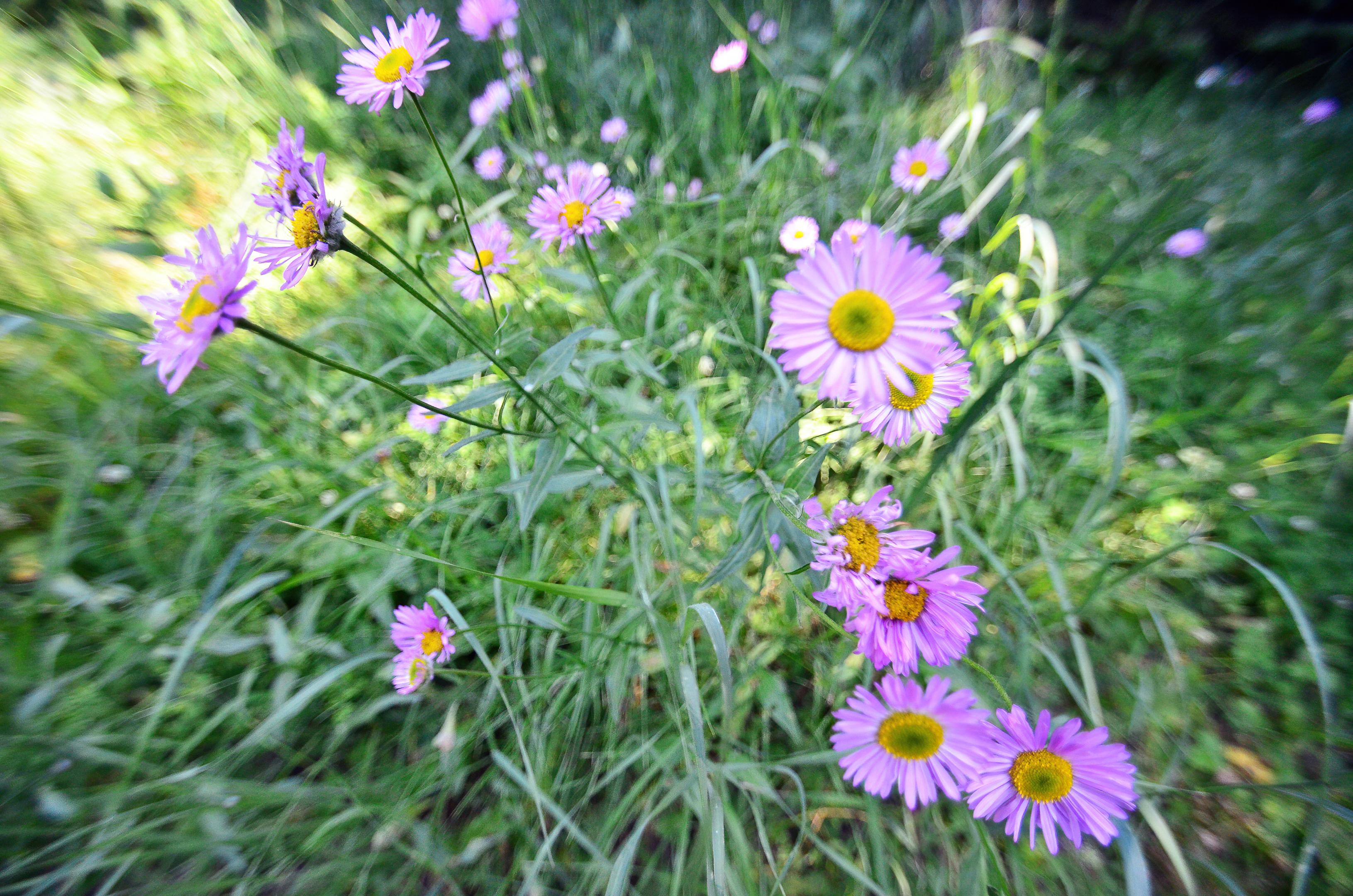 wagner butte hike wildflowers