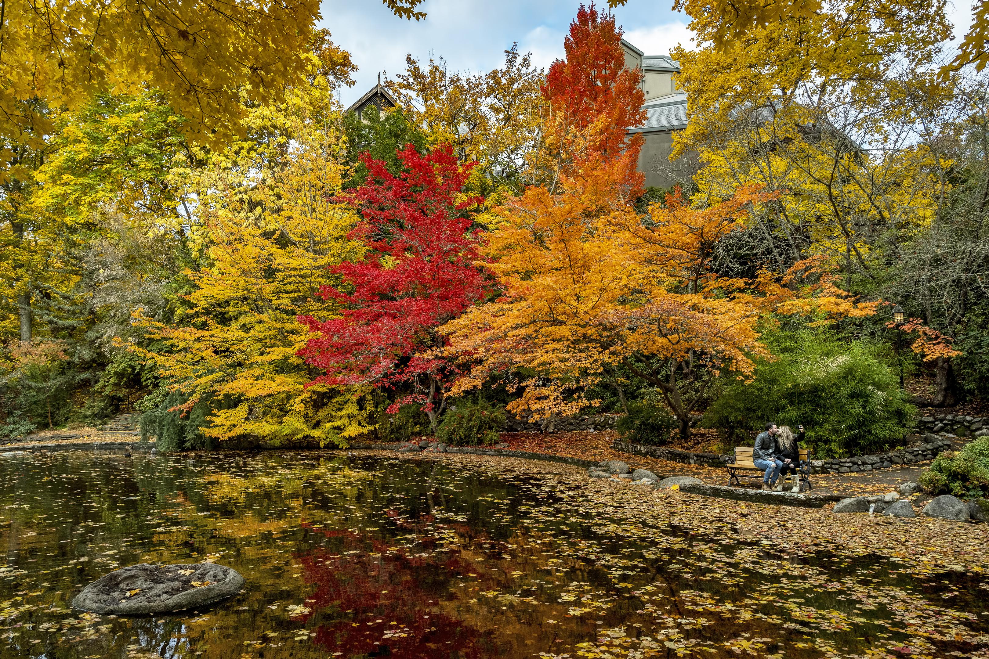 lithia park autumn selfie duck pond