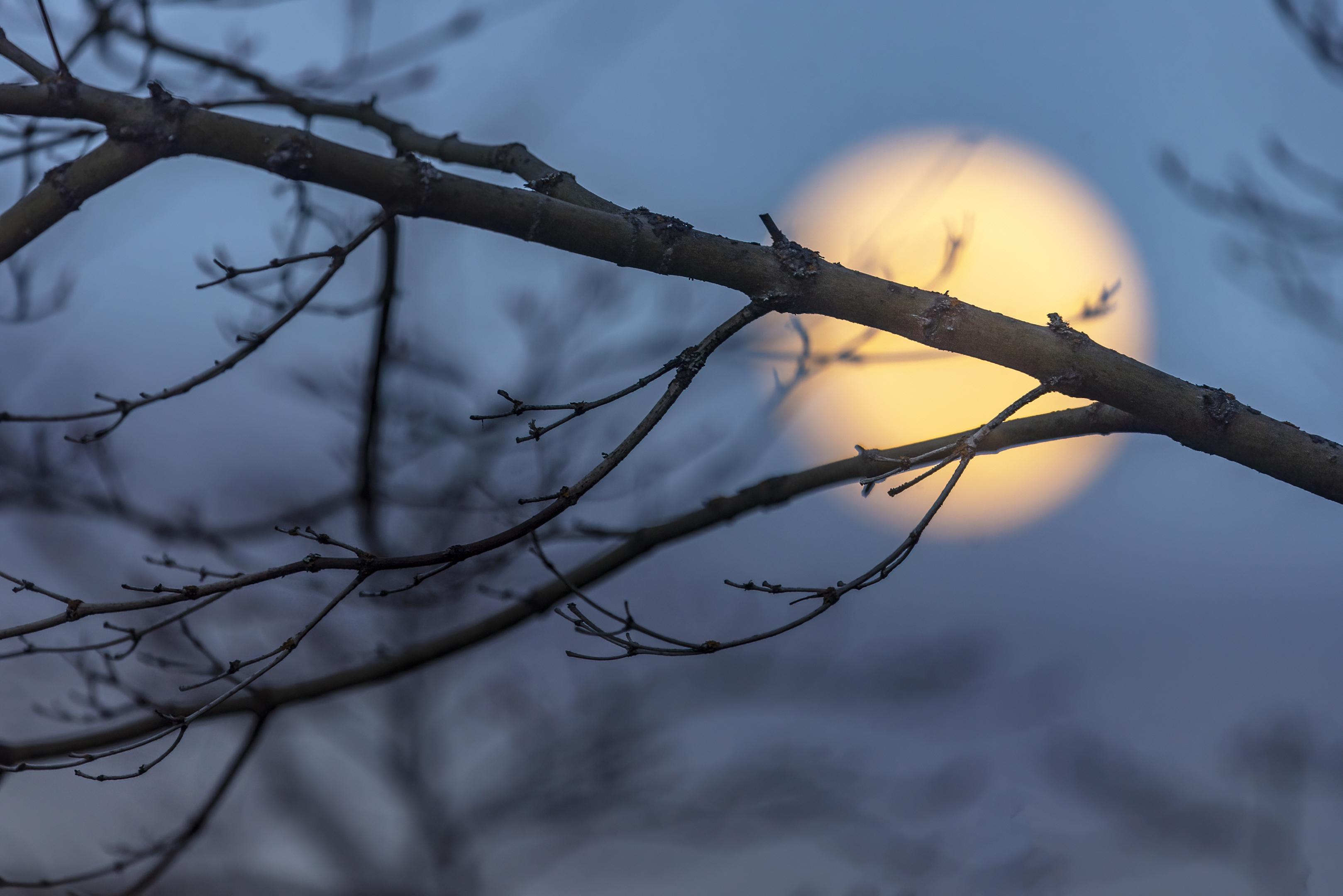full moon branches ashland oregon