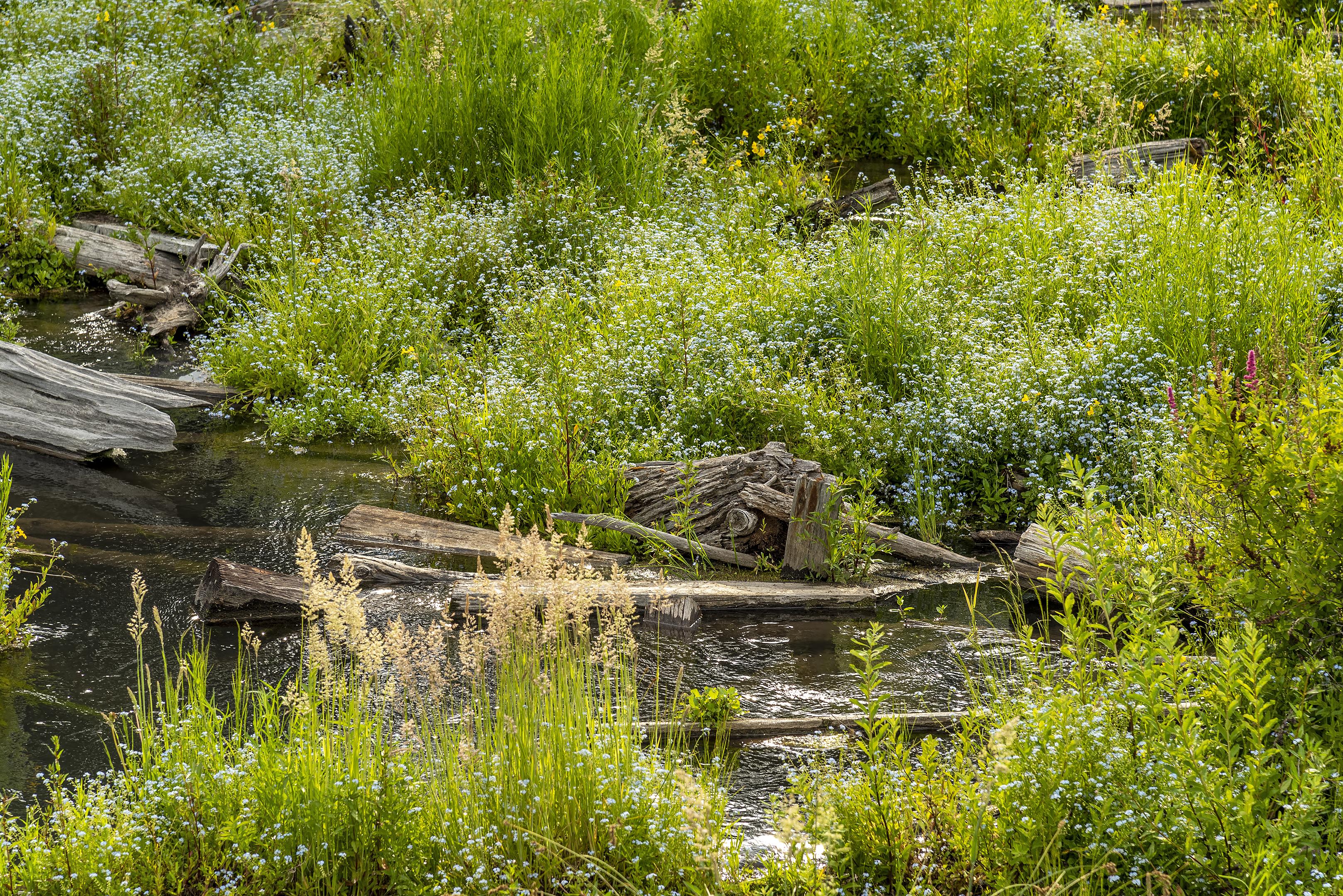 sunriver wildflowers deschutes river