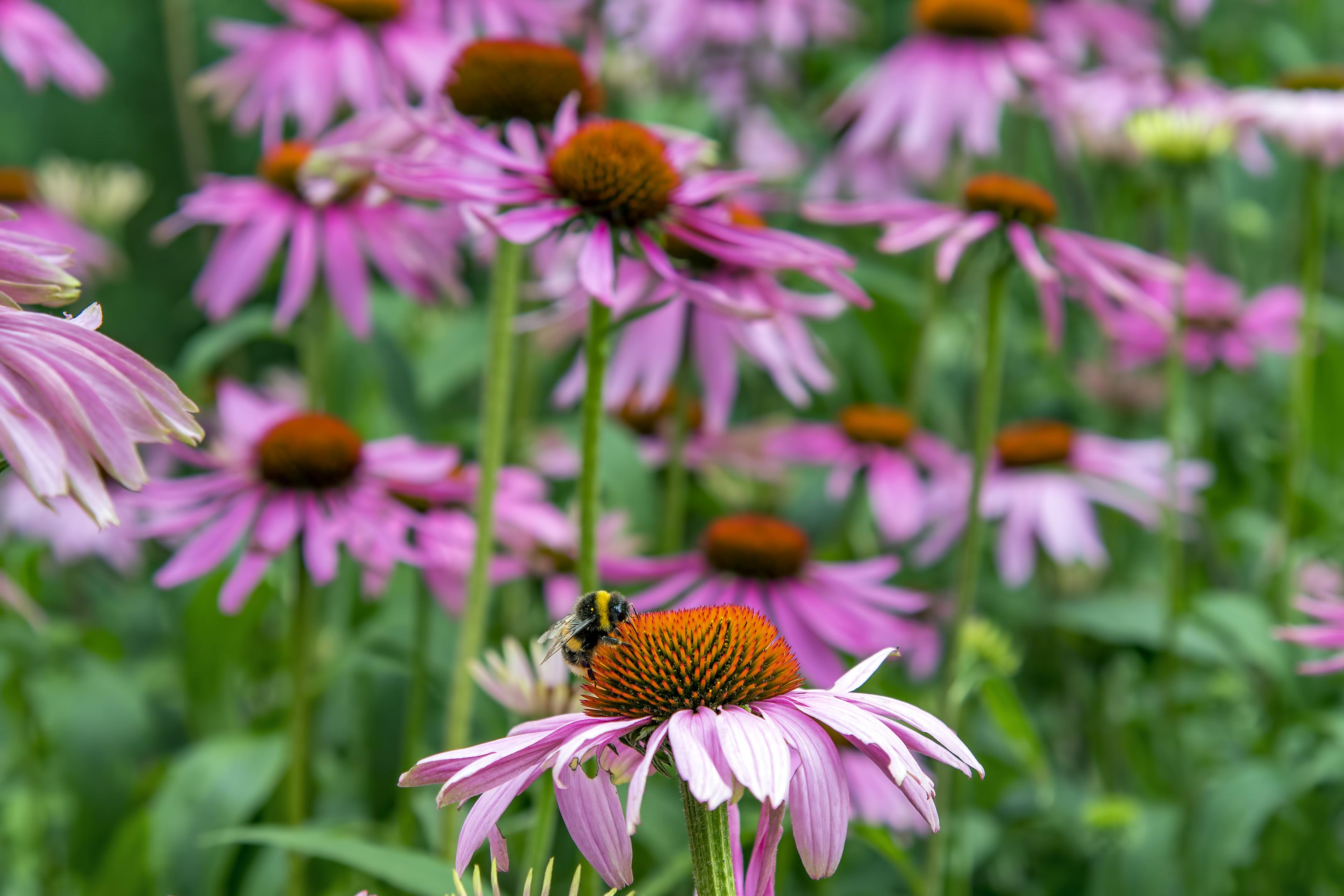 london kew gardens flower bee