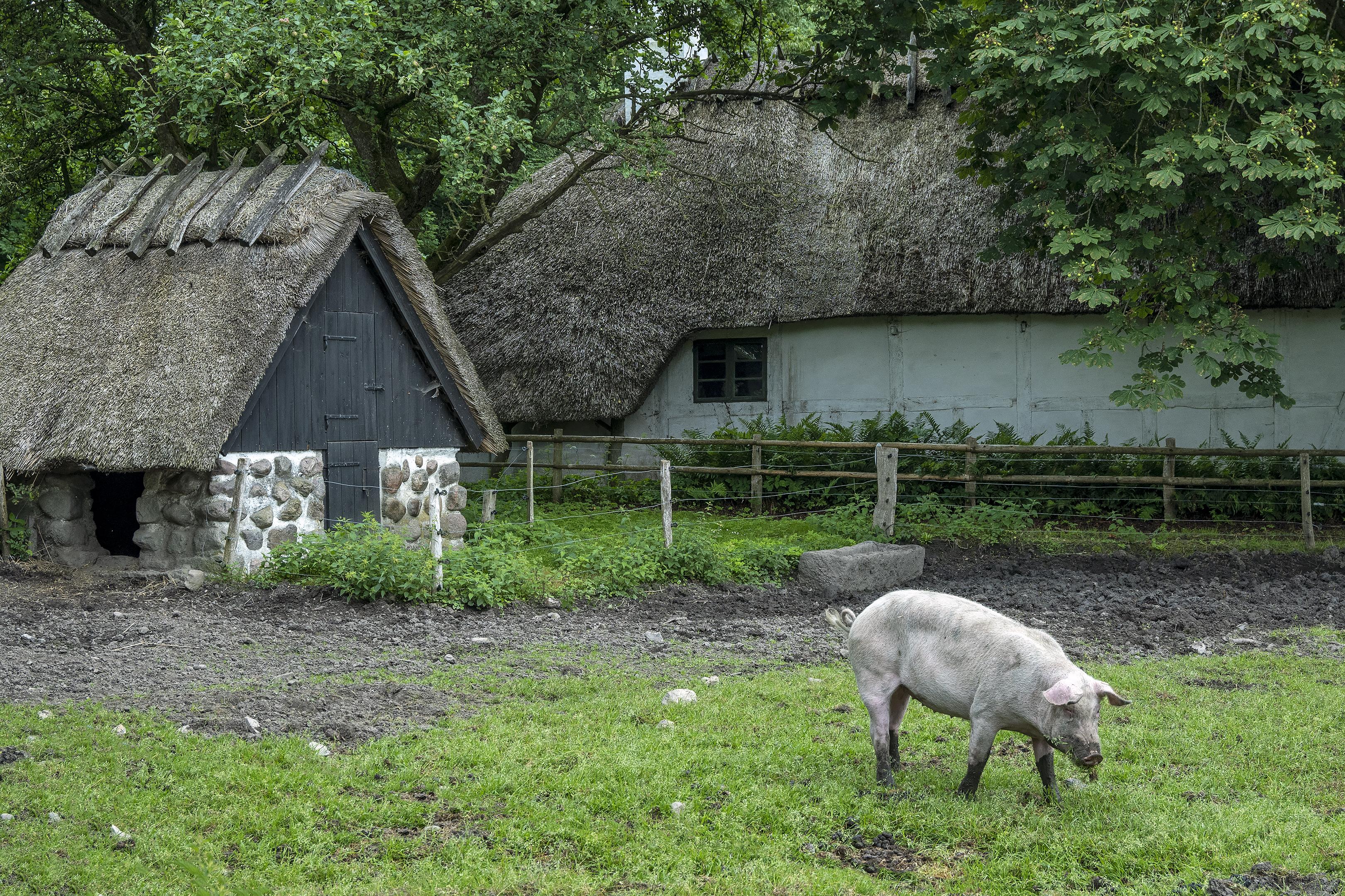 The Funen Village Den Fynske Landsby Smallholding from Turup