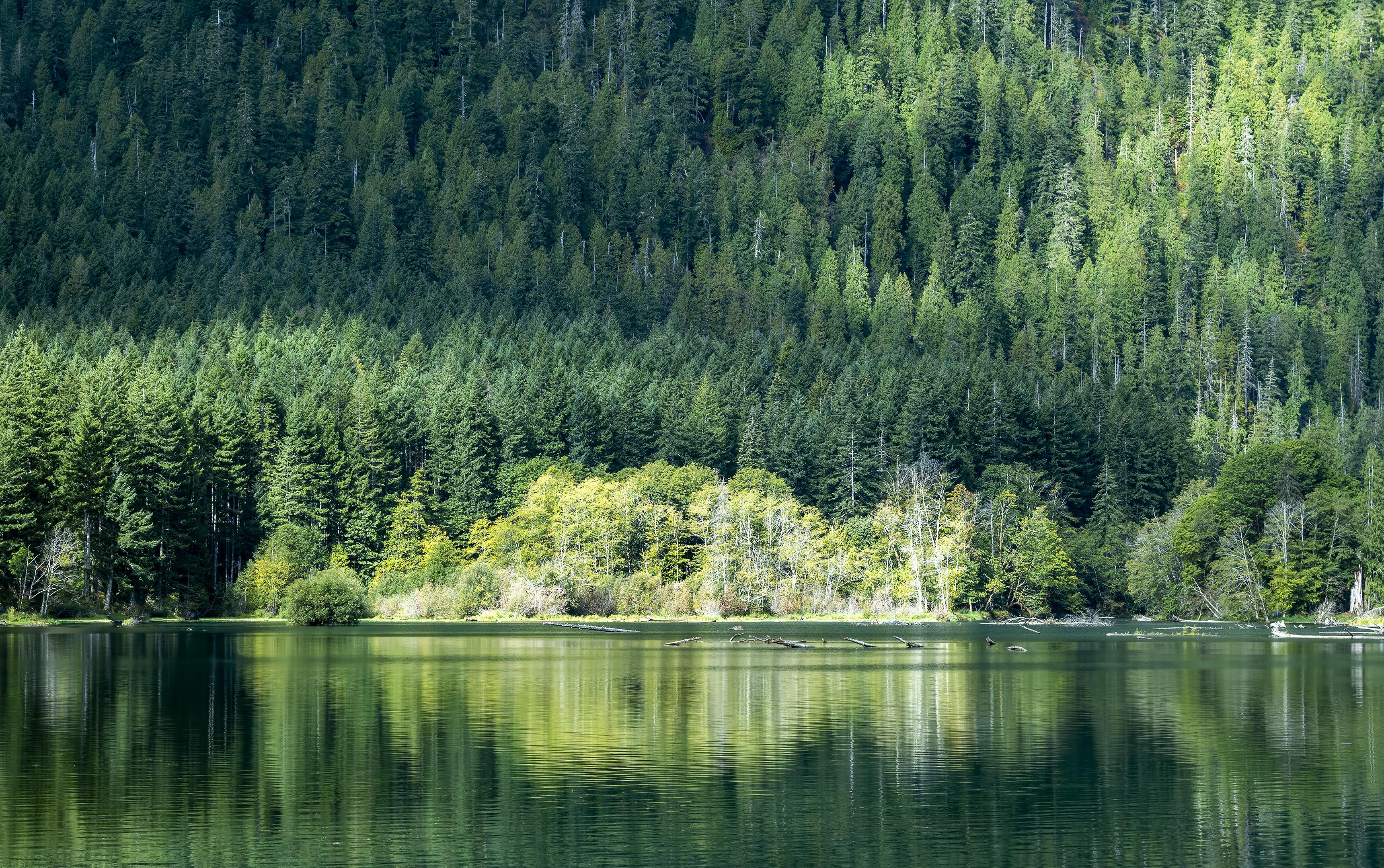 Lake Cushman washington